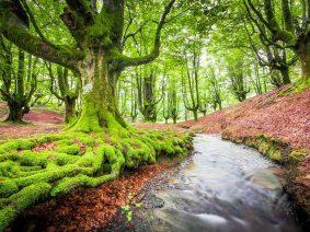 Guide pour visiter les parcs naturels d'Álava dans la désescalade